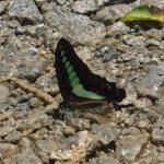 蝶①の詳細へ