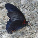 蝶②の詳細へ