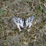 蝶③の詳細へ