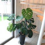 観葉植物も育つ 新島モデルハウスの詳細へ
