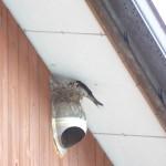 小鳥くちばし